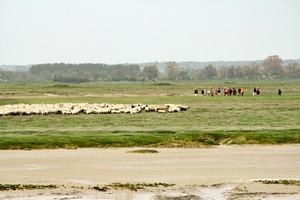 moutons-st-valery